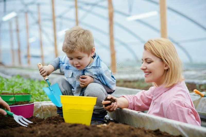 Mère et enfant en serre chaude la mère et l'enfant travaillant en serre chaude moderne font du jardinage mère et fils plantant l' image stock