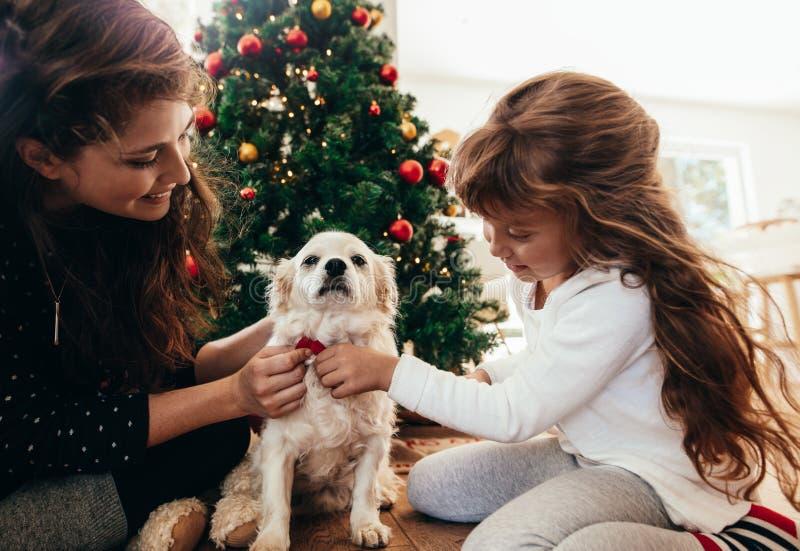 Mère et fille attachant un noeud papillon à leur chien sur Noël photos stock