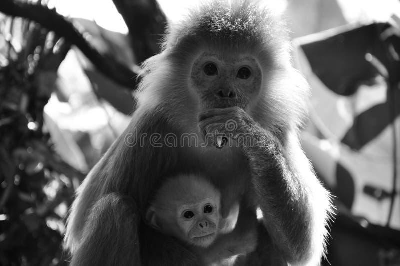 Mère et ses jeunes photos stock