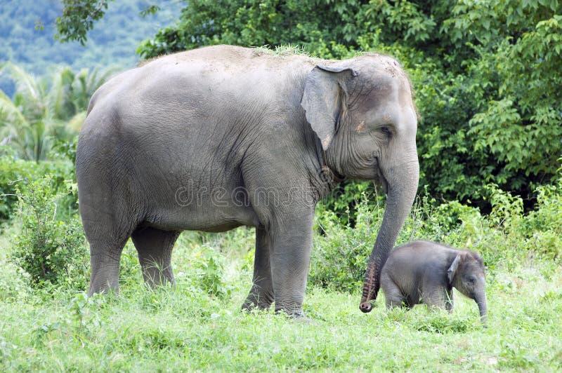 Mère et son éléphant de chéri photos stock
