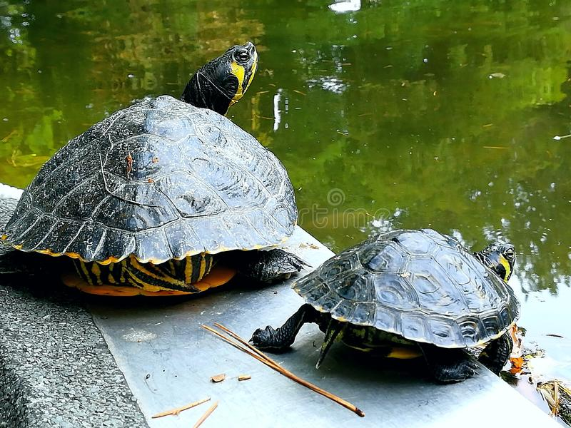 Mère et tortue de daugher photographie stock libre de droits
