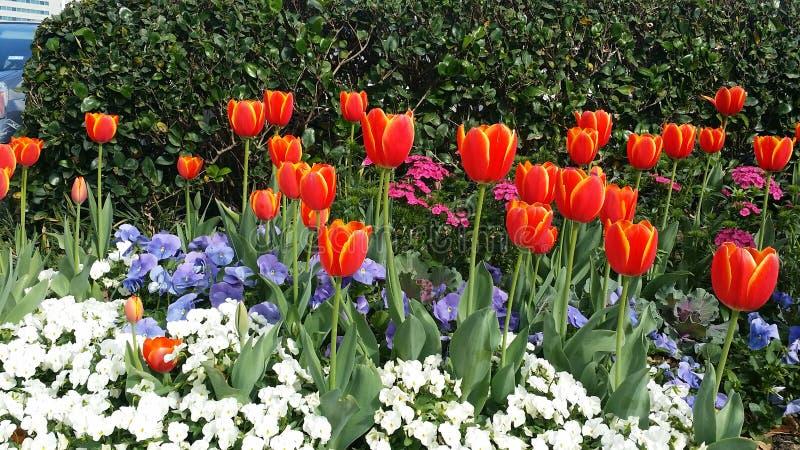 Download Mère nature image stock. Image du zone, houston, nature - 87709027