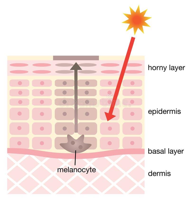 Mécanisme de peau des taches illustration libre de droits