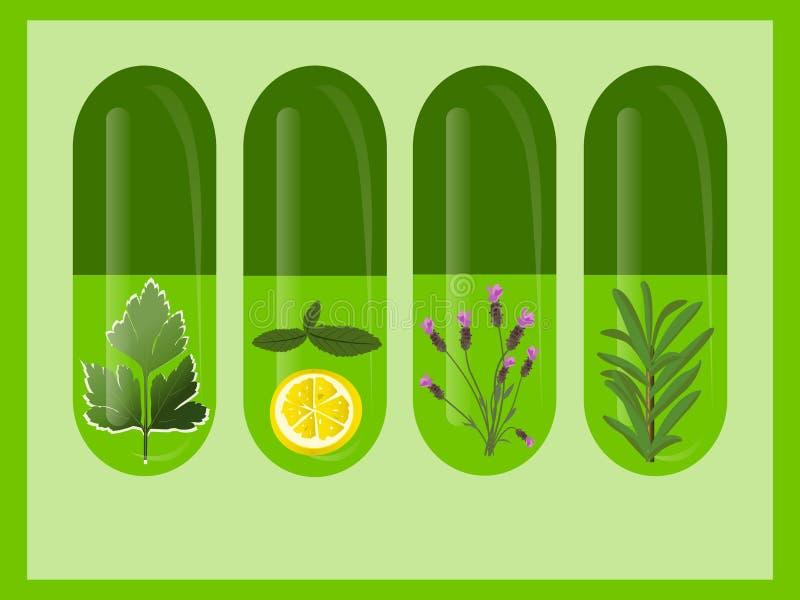 Médecine de fines herbes de vecteur illustration stock