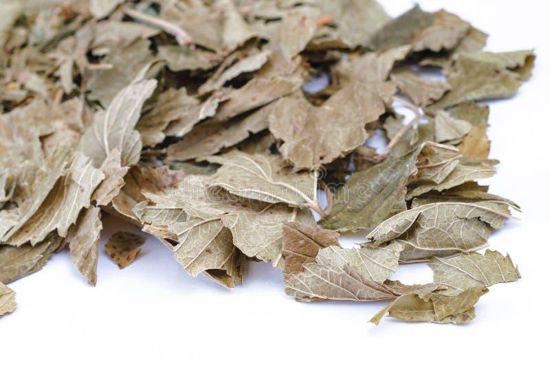 Médecine parallèle, tisane, mélange de fines herbes images libres de droits
