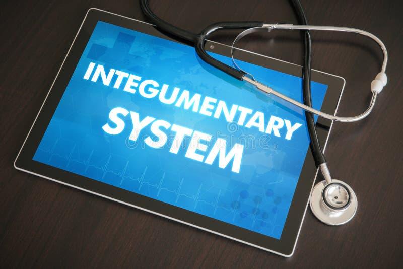 Médico Integumentary do diagnóstico do sistema (doença cutâneo relativa) fotografia de stock royalty free