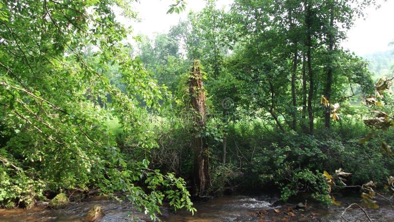 Méditations sur le silence de la nature photos stock