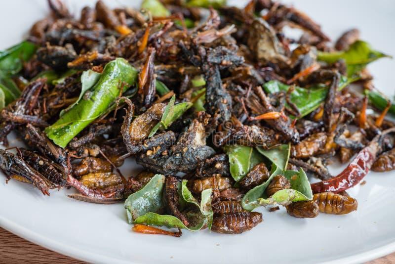 Mélange comestible frit d'insectes du plat blanc images libres de droits