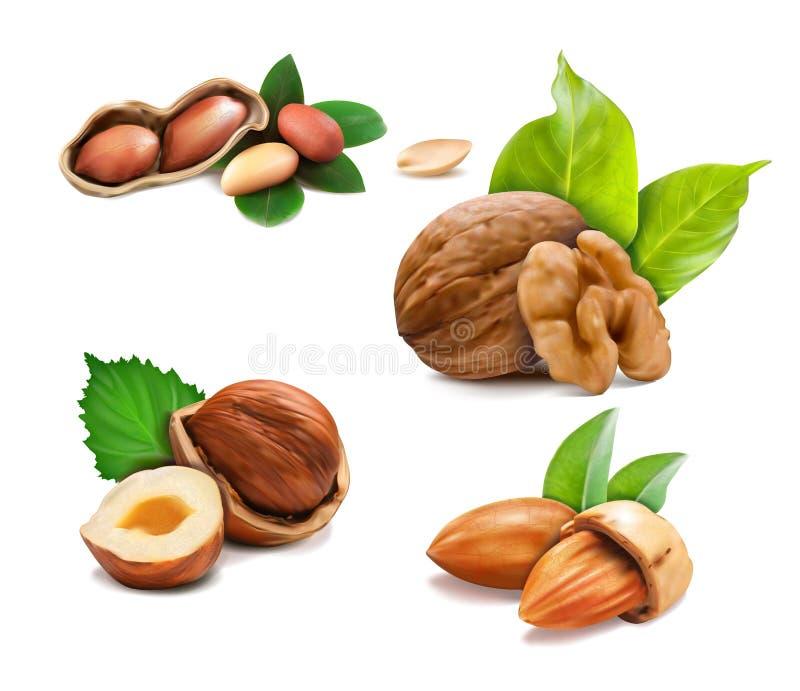 Mélange d'illustration de vecteur de différents types nuts illustration de vecteur
