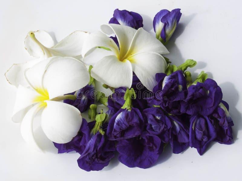 Download Mélange de fleur photo stock. Image du mélange, argile - 45367436