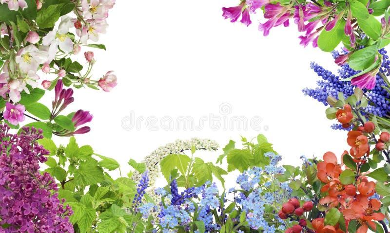 Mélange de fleurs de mai de source images stock