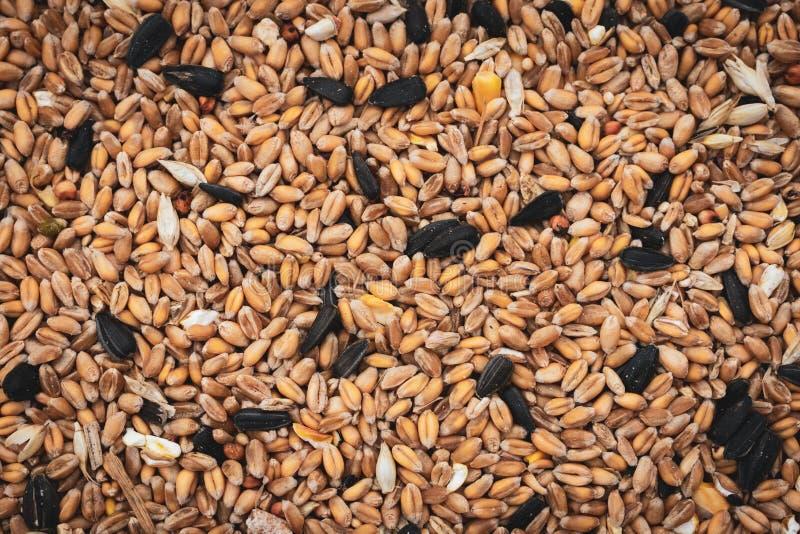 Mélange de graine sauvage d'oiseau photographie stock libre de droits