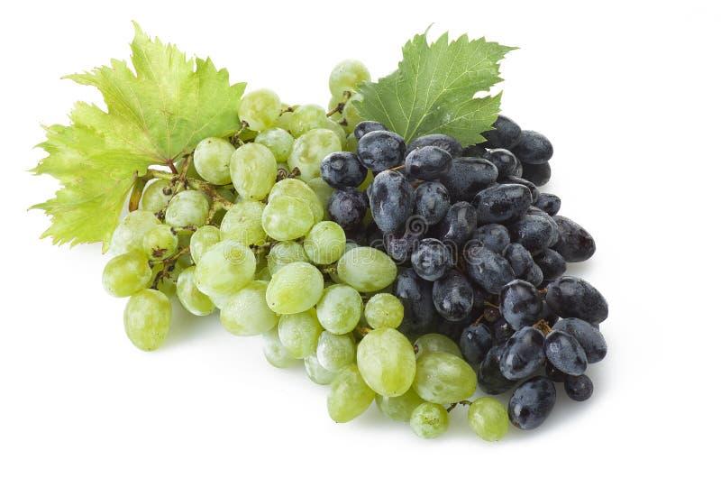 Mélange de raisin de fraîcheur image stock