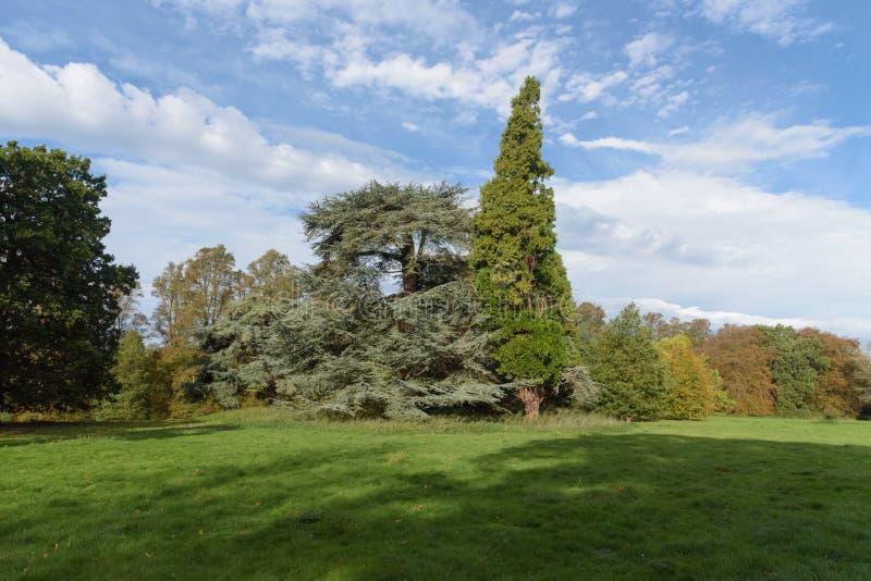 Mélange des arbres avec des couleurs contrastantes en automne au parc de Nowton images stock