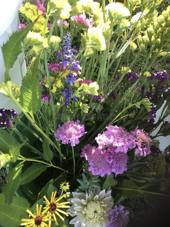 Mélange des fleurs photo stock
