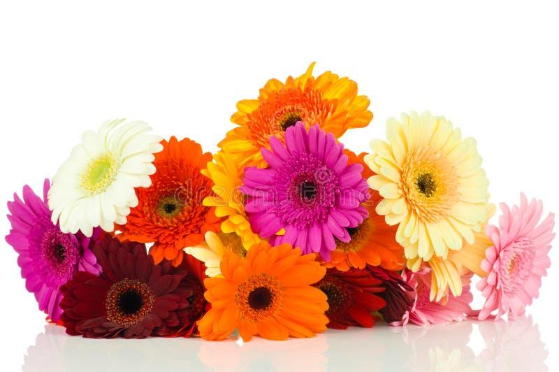 Mélange des fleurs de gerber photographie stock libre de droits