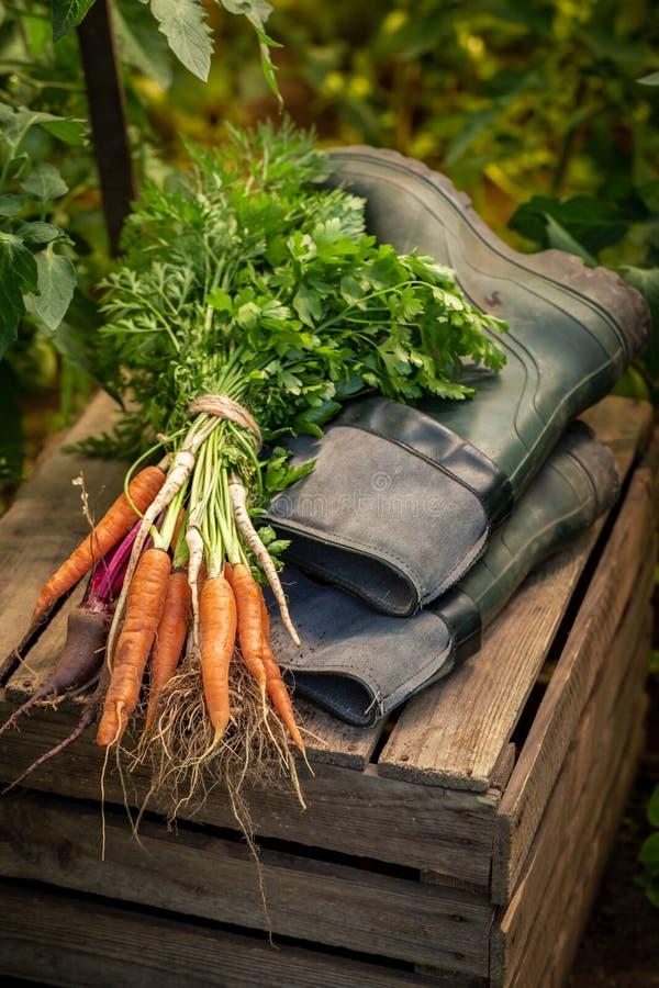 Mélange des légumes frais et du vieux puits en caoutchouc vert image libre de droits