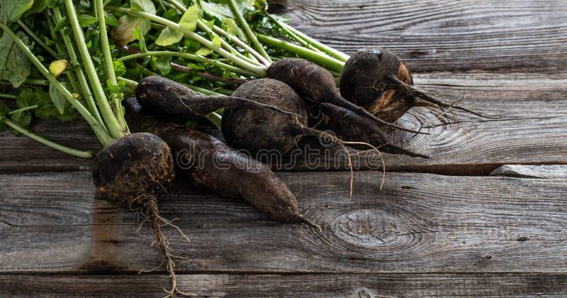 Mélange des radis noirs organiques criqués avec les dessus verts frais image stock