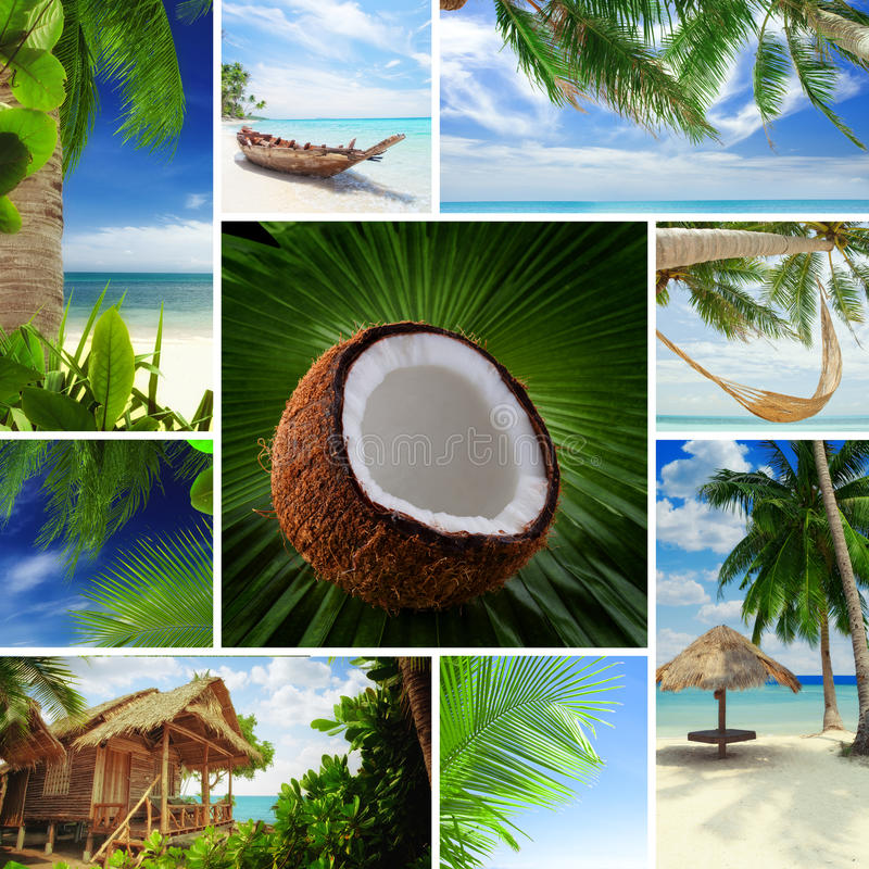 Mélange tropical photo stock