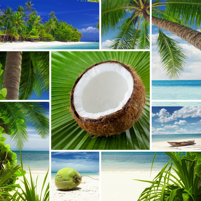 Mélange tropical photo libre de droits