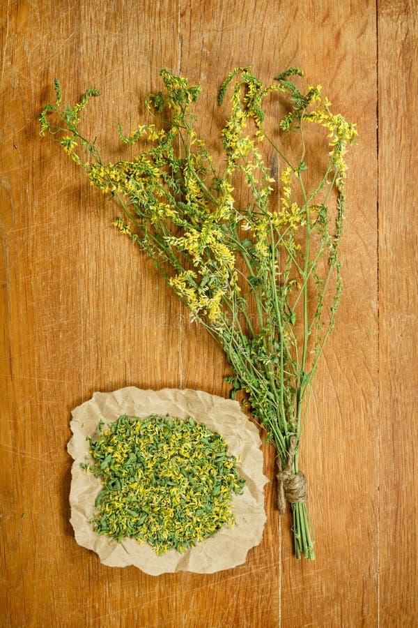 Mélilot Herbes sèches Phytothérapie, médicinal phytotherapy elle image stock