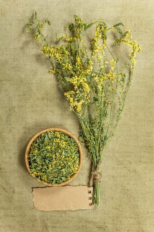 Mélilot Herbes sèches Phytothérapie, médicinal phytotherapy il images libres de droits