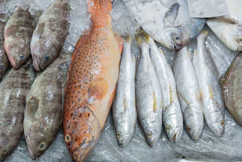 Mérou rouge frais sur la glace sur la poissonnerie mérou Rouge-réuni Fruits de mer Dégustation des fruits de mer de Thaïlande photos libres de droits