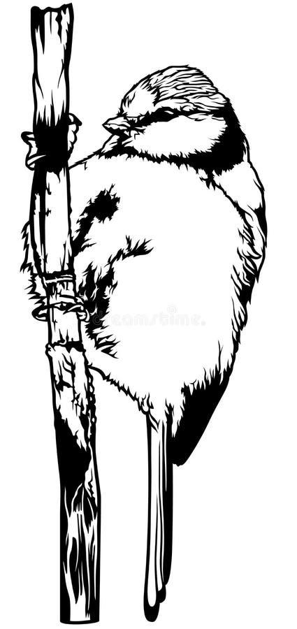 Mésange bleue illustration de vecteur