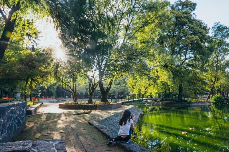 MÉXICO - 19 DE SETEMBRO: Mulher que toma fotos na floresta vazia de Chapultec devido ao terremoto fotos de stock royalty free
