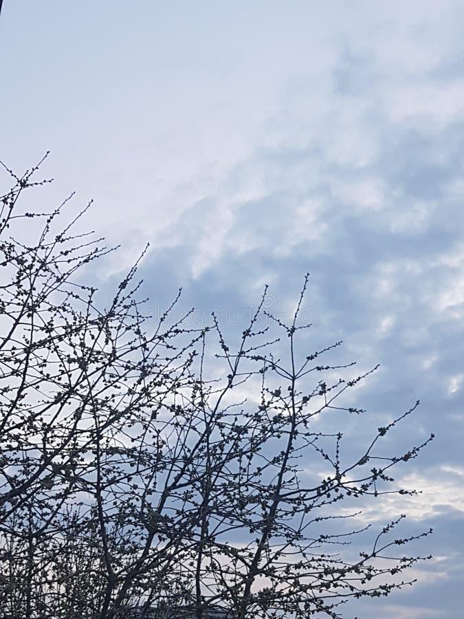 Même au printemps photo libre de droits