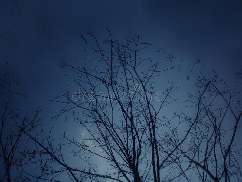 Même l'arbre de ciel images libres de droits