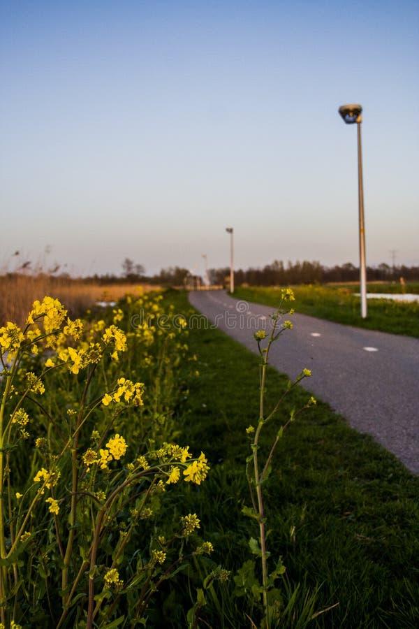 Même l'mauvaise herbe peut être belle images libres de droits