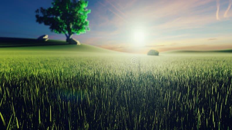 Místico e fascinar da grama de verde da manhã, da árvore no fundo, do sol da manhã e das nuvens que voam perto rendi??o 3d ilustração royalty free