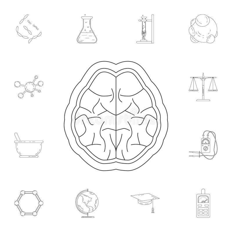 Móżdżkowa ikona Szczegółowy set nauki i lab ilustracje Premii ilości graficznego projekta ikona Jeden inkasowe ikony dla nas ilustracja wektor