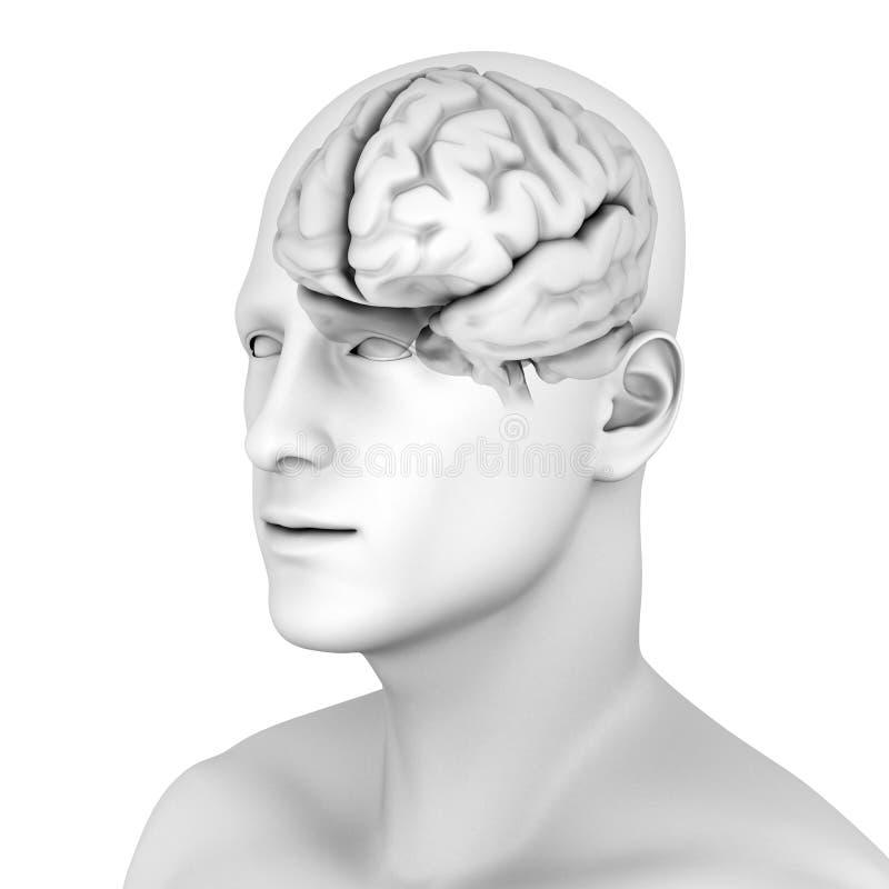 móżdżkowa istota ludzka royalty ilustracja