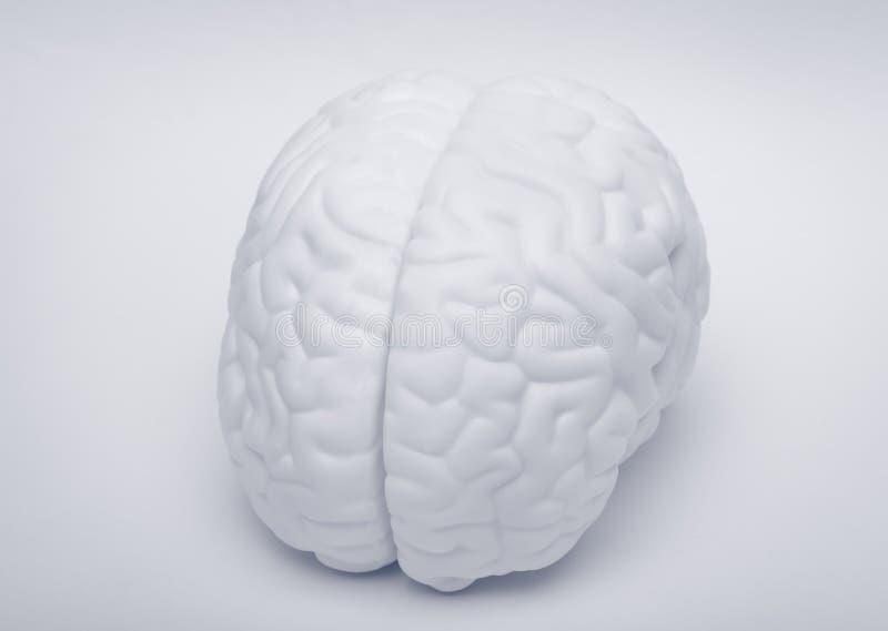 móżdżkowa istota ludzka obraz stock