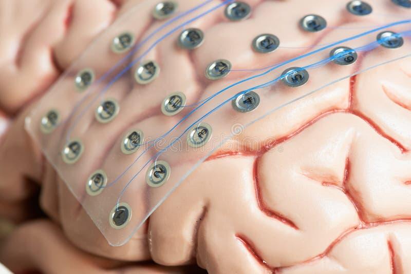 Móżdżkowe fale nagrywa elektrody na mózg modela powierzchni zdjęcie royalty free