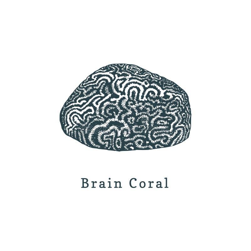 Móżdżkowego korala wektoru ilustracja Rysować denny polip na białym tle ilustracja wektor