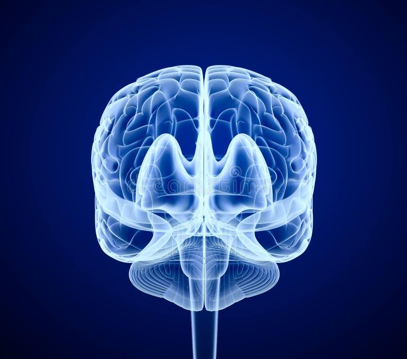 Móżdżkowy obraz cyfrowy, promieniowanie rentgenowskie ilustracji