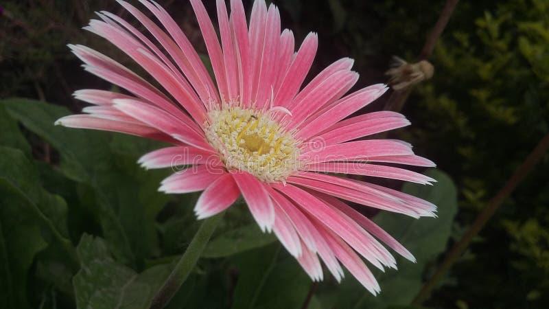 Móbil da natureza da flor fotos de stock royalty free