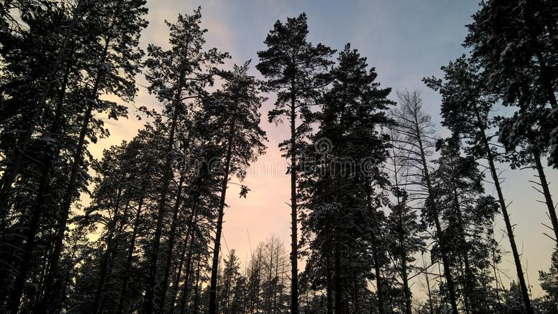Móbil do lumia 640xl da floresta do inverno da noite foto de stock