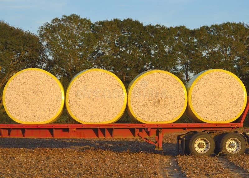 Módulos redondos do algodão carregados no leito imagem de stock