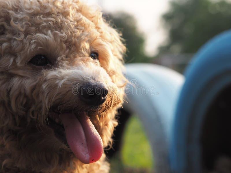 mój śliczny pies fotografia royalty free