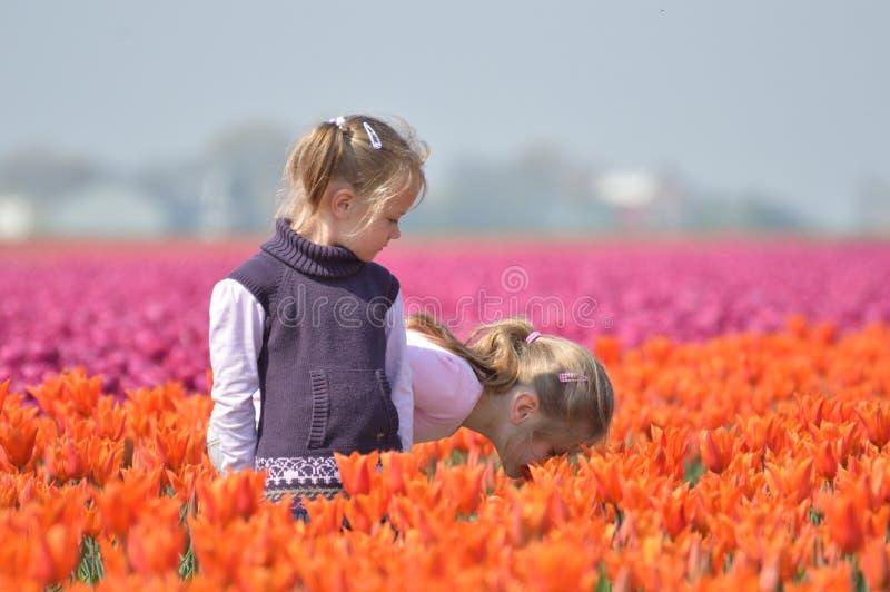 Mój bratanicy między tulipanami zdjęcia royalty free