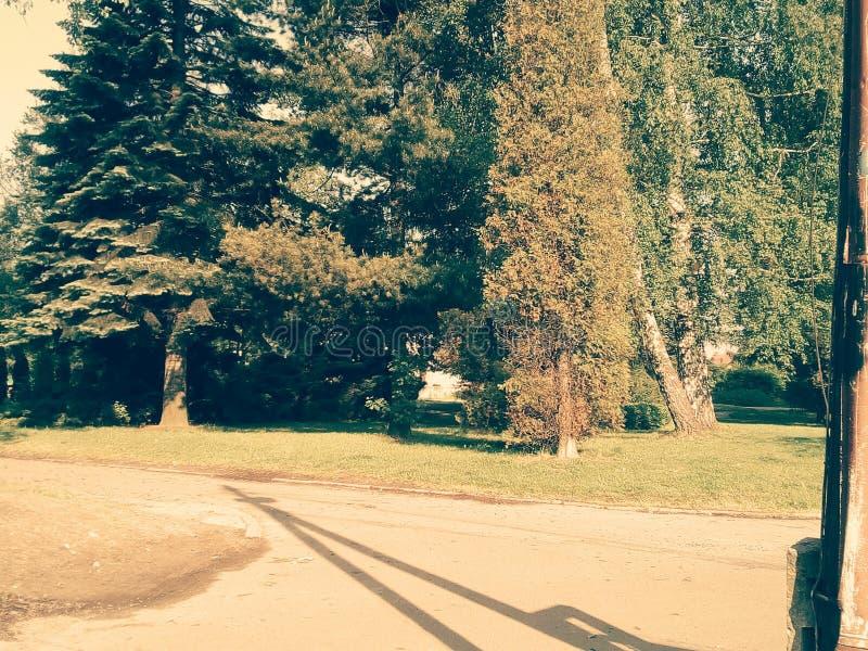 mój drzewo fotografia royalty free