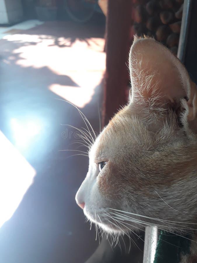 mój kot fotografia royalty free