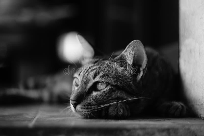 mój kot obrazy stock