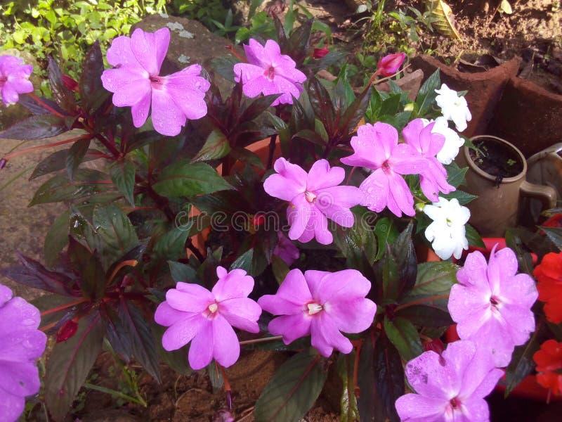 Mój kwiatu ogród zdjęcie royalty free