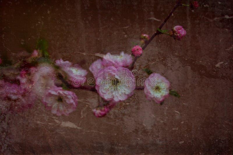 Mój kwiatu tła hargita Otto obraz stock