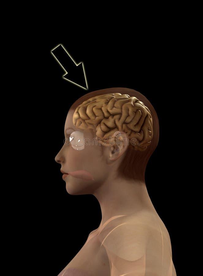 Mój Mózg Fotografia Stock